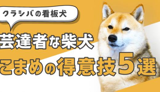 芸達者な柴犬こまめの得意技5選!